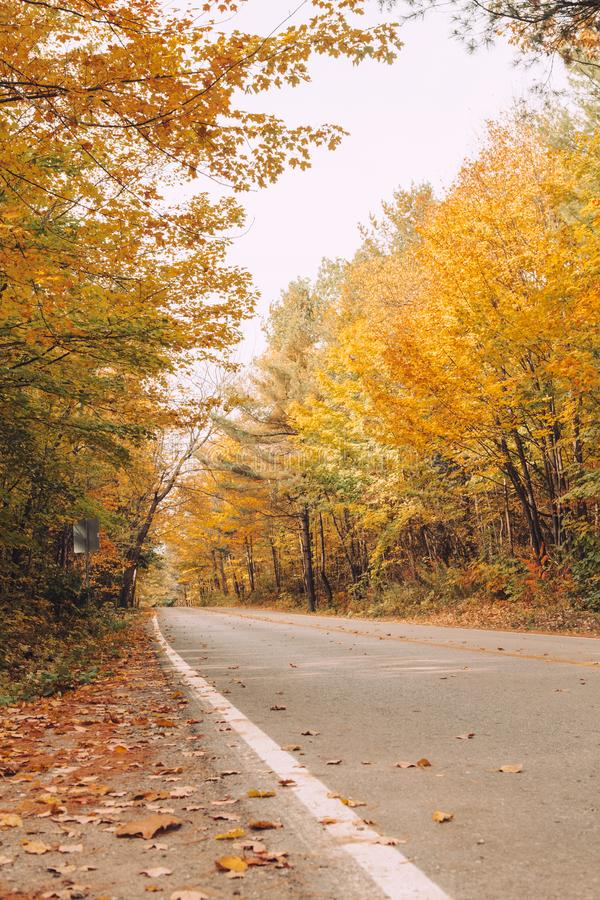Empty road street in colorful autumn forest park stock photography