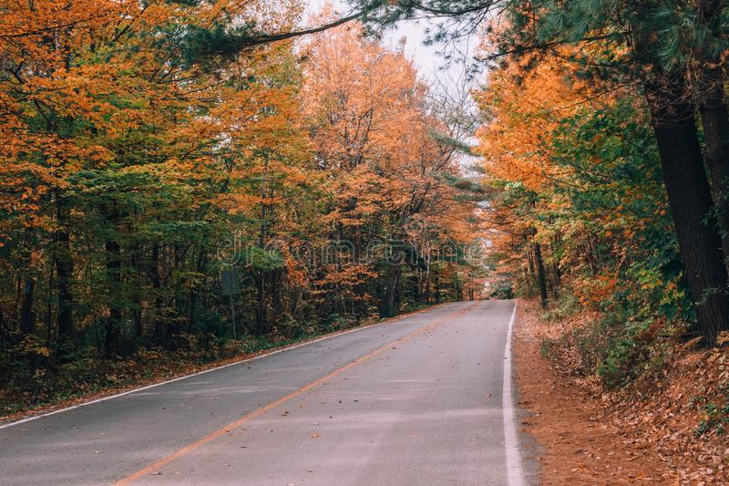 Empty road street in colorful autumn forest park royalty free stock photo