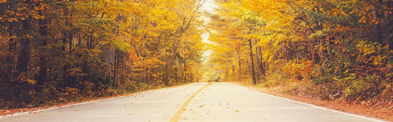 Empty road street in colorful autumn forest park with yellow orange red leaves on trees. Beautiful fall season outdoors. stock photo