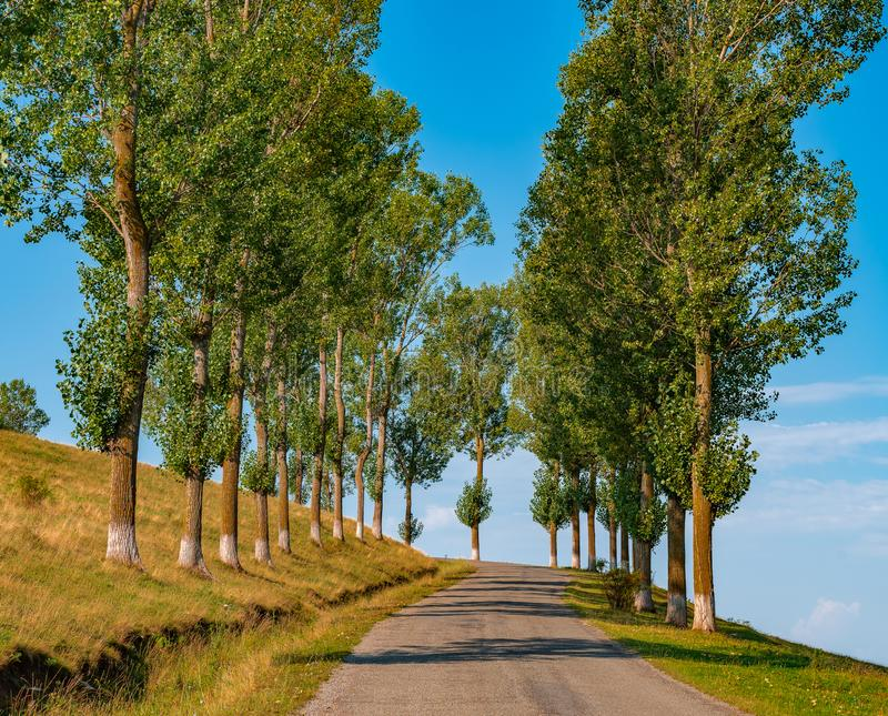 Empty Road with tall trees. stock photos