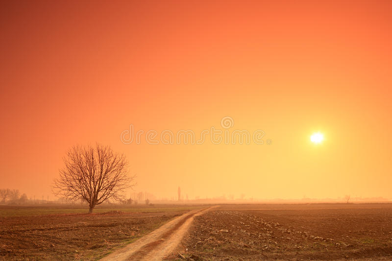 Empty road, tree and the sun at sunset stock photos