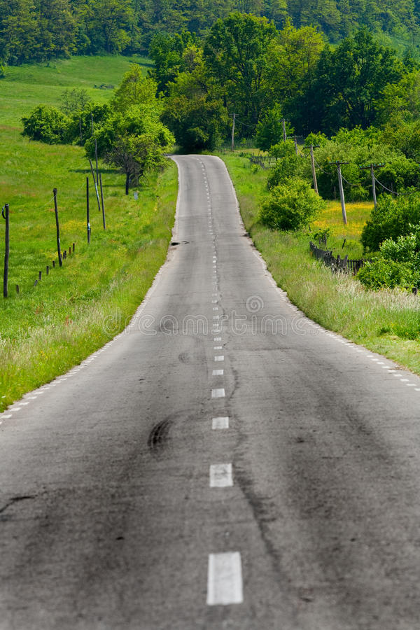 Download Empty road between trees stock image. Image of pavement - 14456461