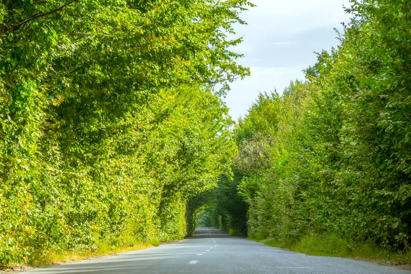 Empty Rural Road and Green Tree Tunnel stock image