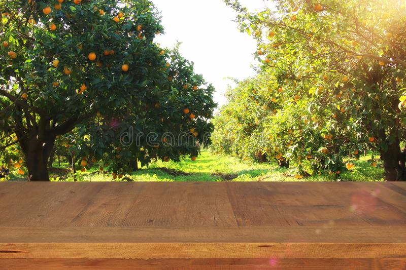 Empty rustic table in front of countryside orange tree background. product display and picnic concept. Empty rustic table in front of countryside orange tree stock photos