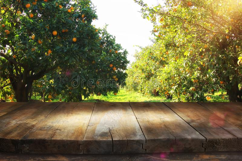 Empty rustic table in front of countryside orange tree background. product display and picnic concept. Empty rustic table in front of countryside orange tree royalty free stock photography