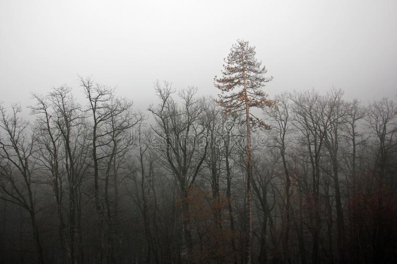 Foggy forest - depression royalty free stock images