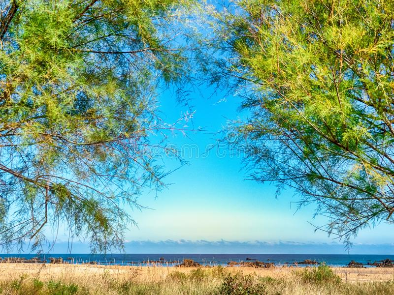 Empty sandy beach between the branches of trees. On the ocean royalty free stock photography