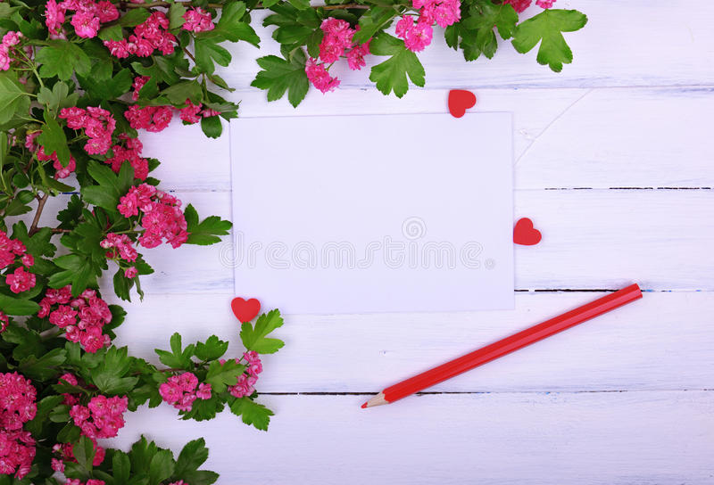Empty sheet of paper and a red wooden pencil on a white surface. In the corner a branch of hawthorn with pink flowers stock photos