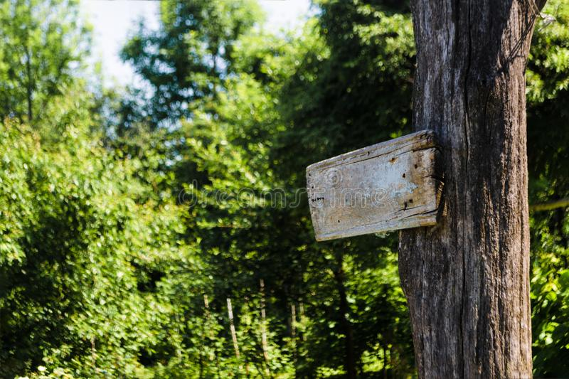 Empty sign directions on a tree in a green summer forest. Self-made rectangular board form pointer with space for text on nature royalty free stock photos