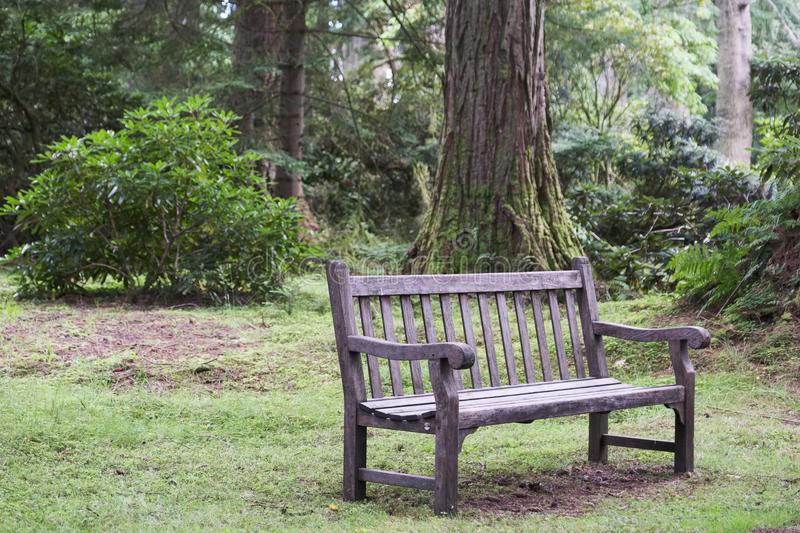 Empty single wooden seat in forest woodlands. Empty single wooden seat bench in forest woodlands Scotland uk stock photography