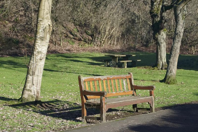 Empty single wooden seat in forest woodlands at summer weather sunshine. Uk royalty free stock image