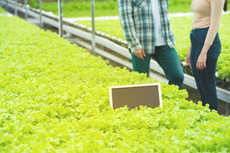 Empty small black board on green vegetable in Hypogenic organic farm with part of asian man and woman standing beside green. Empty small black board on green stock photos