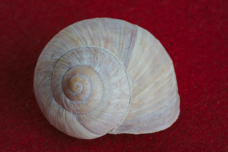 Empty snail shell on red background, spiral royalty free stock photography