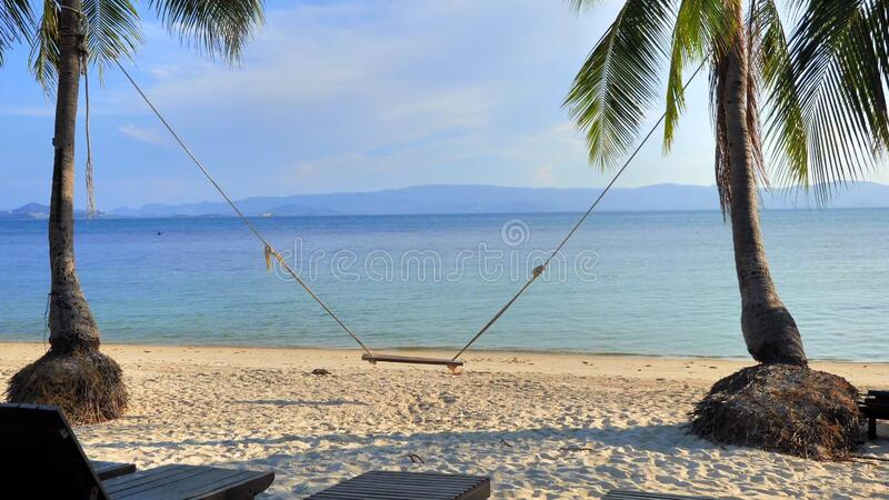Empty swing on palm tree royalty free stock photo