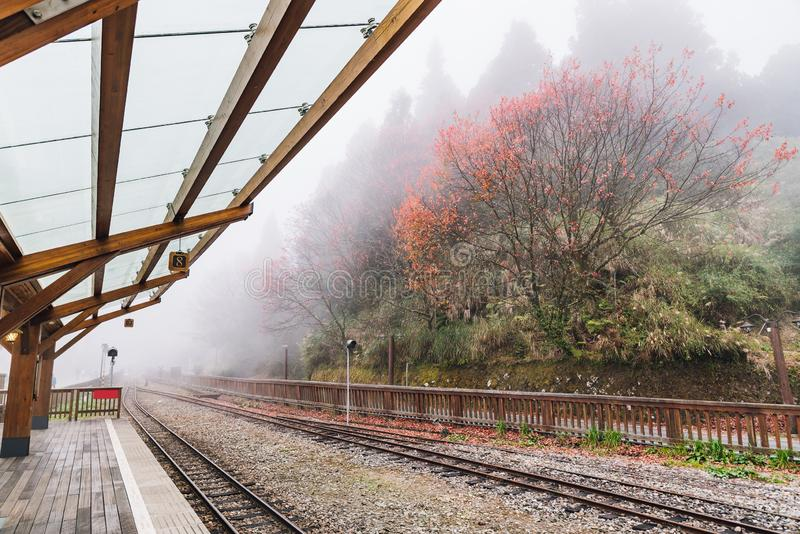 Empty train rails in Alishan Forest Railway stop on the platform of Zhaoping railway station with trees and fog in the background. In Alishan, Taiwan stock photo