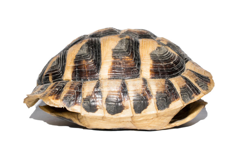 Empty Turtle Shell Stock Photo - Image: 79805107