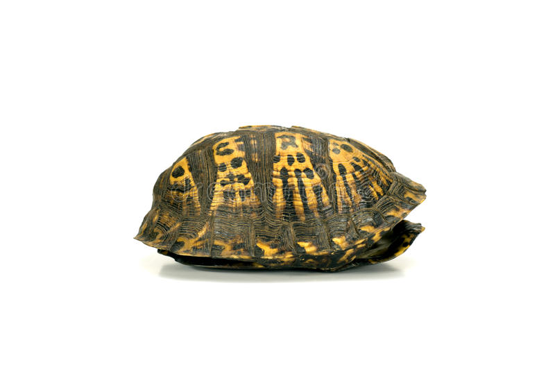 Empty turtle shell on white. Empty box turtle shell on white stock photo