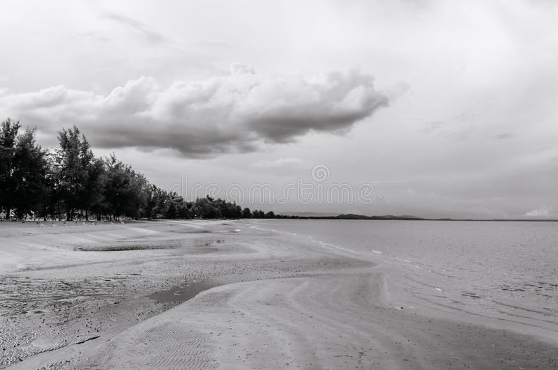 Empty vast sand beach horizon with pine tree and cloudy sky - black and white. Nature background wallpaper stock images