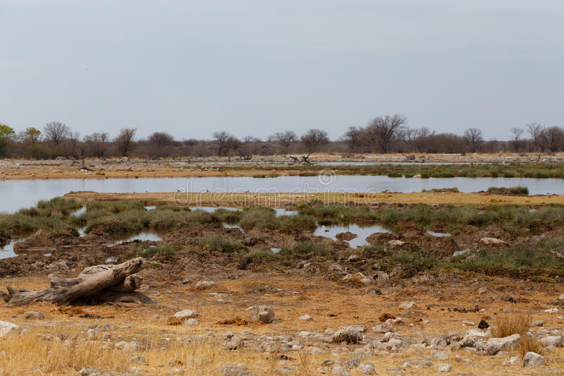 Empty waterhole in namibia game reserve stock image