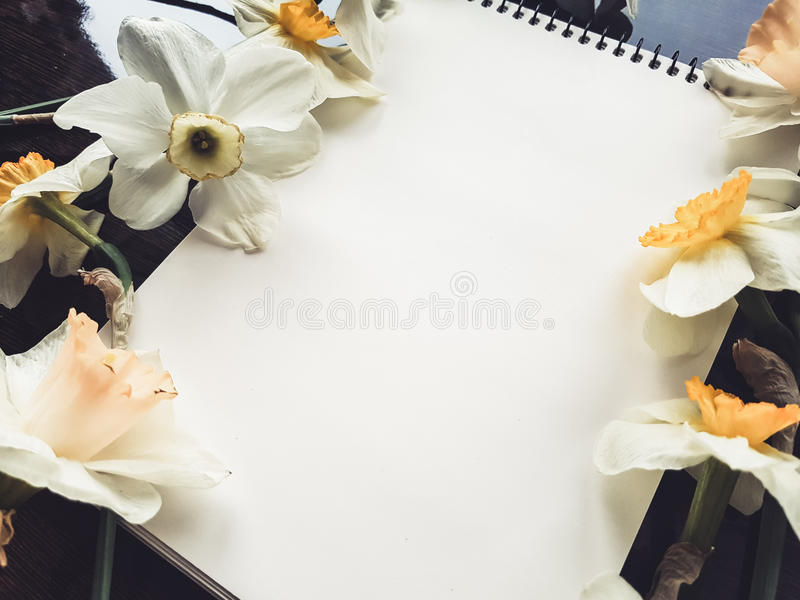 Empty white album sheet with light flowers royalty free stock images