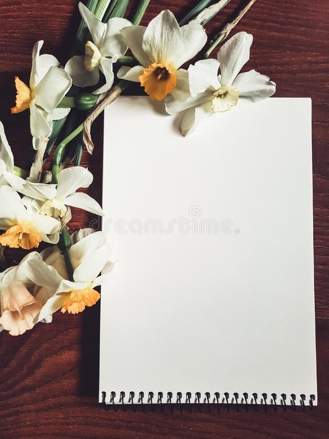 Empty white album sheet with light flowers stock images