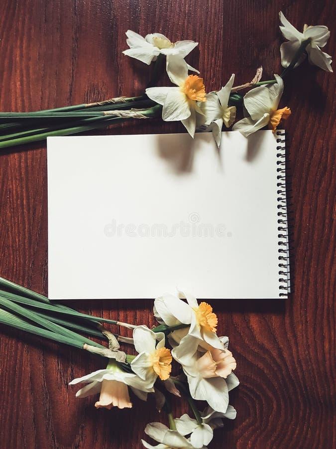 Empty white album sheet with light flowers stock image