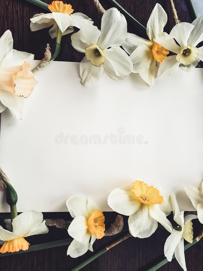 Empty white album sheet with light flowers royalty free stock photo