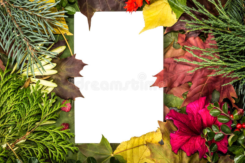 Empty white card. Fallen leaves and branches of Christmas trees. White background flowers. royalty free stock photos