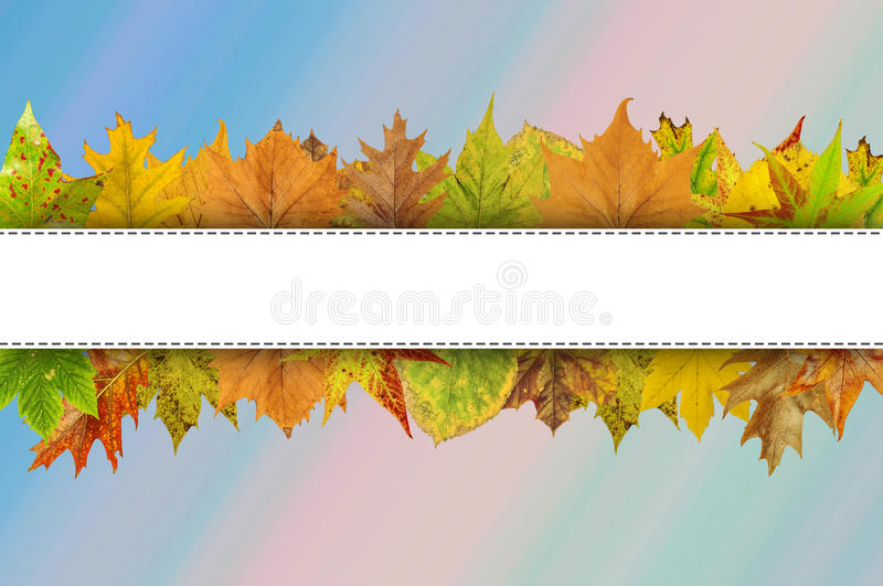 Empty white line for Happy Thanksgiving typography on autumn leaves stock photos