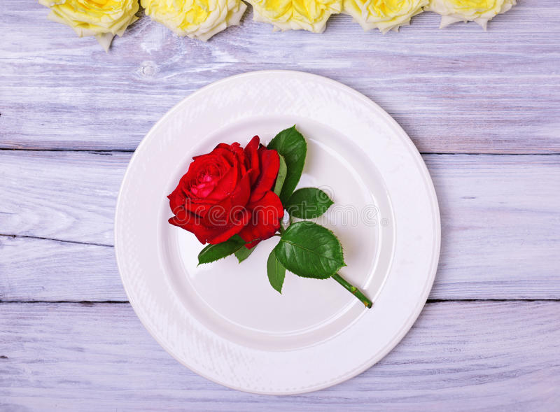 Empty white plate with a red rose stock images
