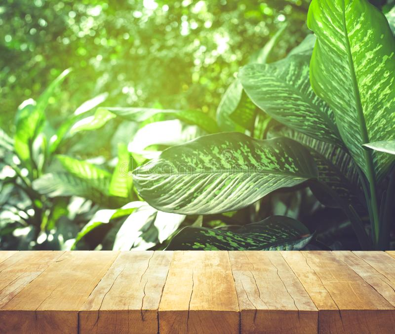 Empty of wood table top on beautiful tropical leaf from garden. Backgrounds.For montage product display or key visual layout stock images