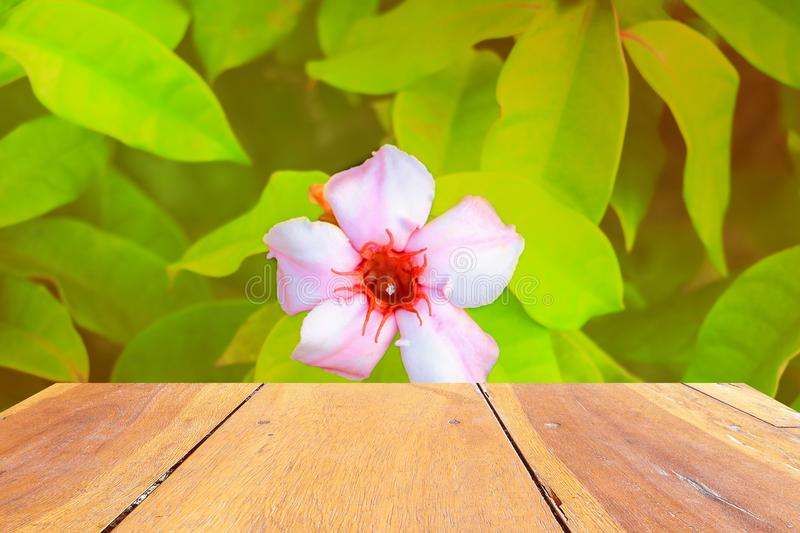 Empty wood texture board floor shelf with flower in nature background with copy space add text.  stock photos