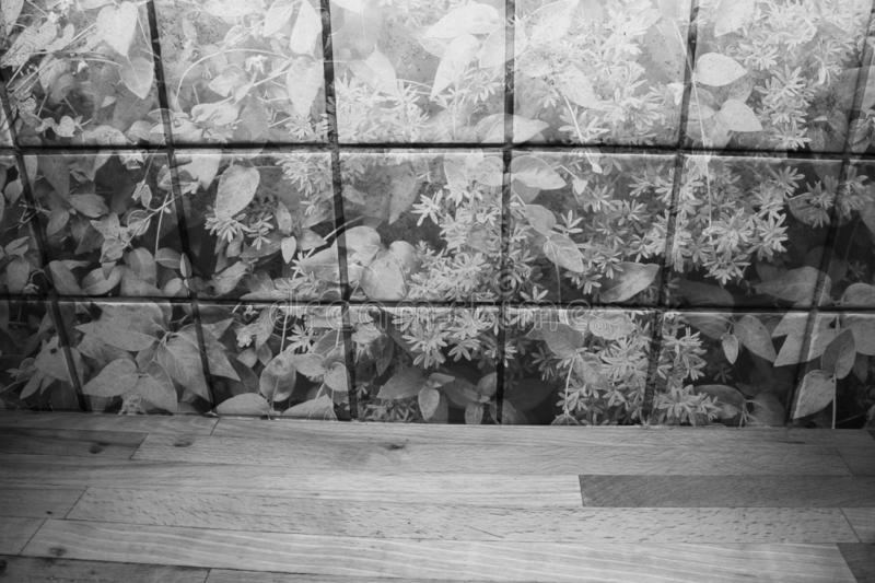 Wooden kitchen counter in front of kitchen brick wall with plants. Black and white. royalty free illustration