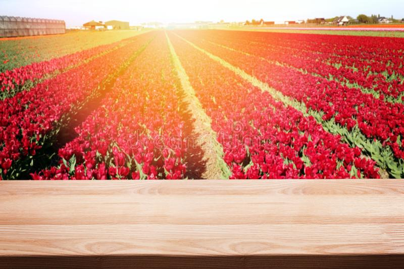 Empty wooden table for montage, your product display with blurred field of red tulips royalty free stock photos