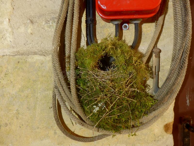 Empty Wren Nest. Close up of an empty wren nest built in coils of rope in a workshop royalty free stock images