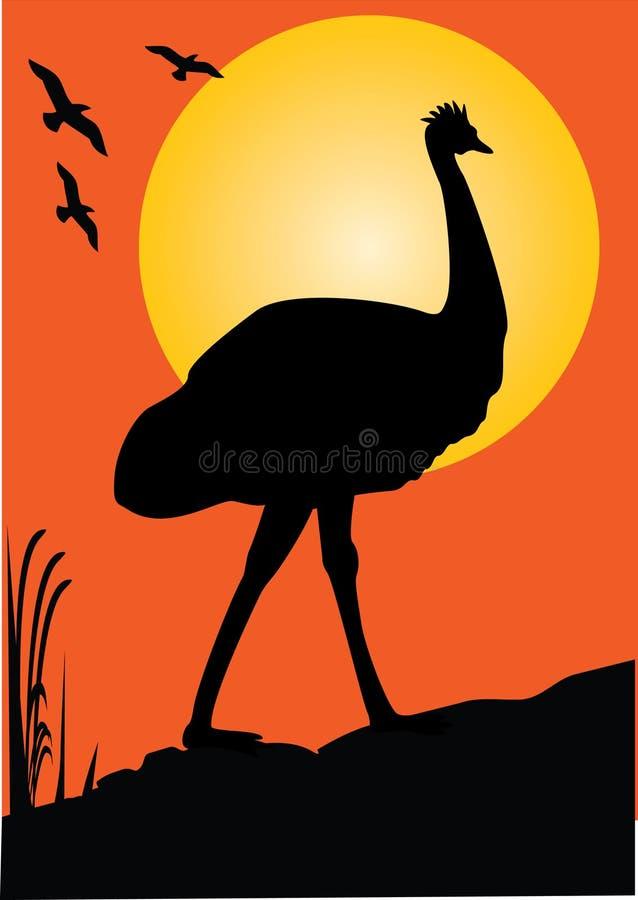 emu royaltyfri illustrationer