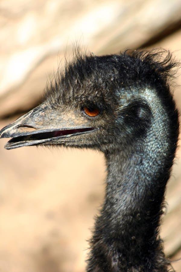 Download Emu photo stock. Image du facial, becs, indigène, expressions - 90564