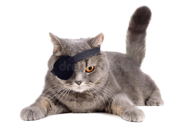 Enögd katt royaltyfri foto