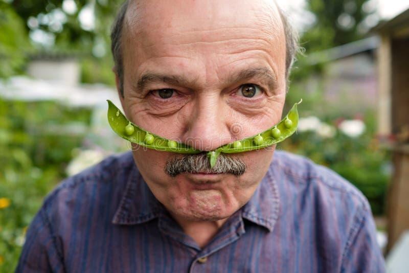 En äldre man bedrar omkring Han rymmer en ärtafröskida nära hans framsida som en mustasch fotografering för bildbyråer