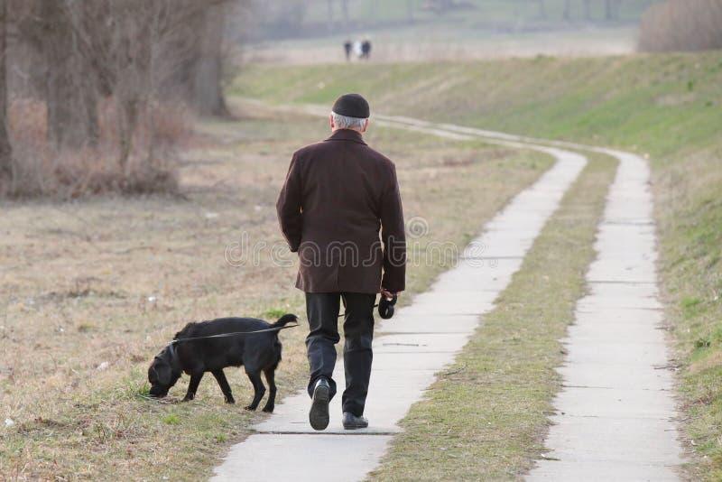 En äldre man i demi-säsong kläder går i parkerar med hans svarta labrador hund Morgonaktivitet av stadsinvånare och royaltyfri fotografi