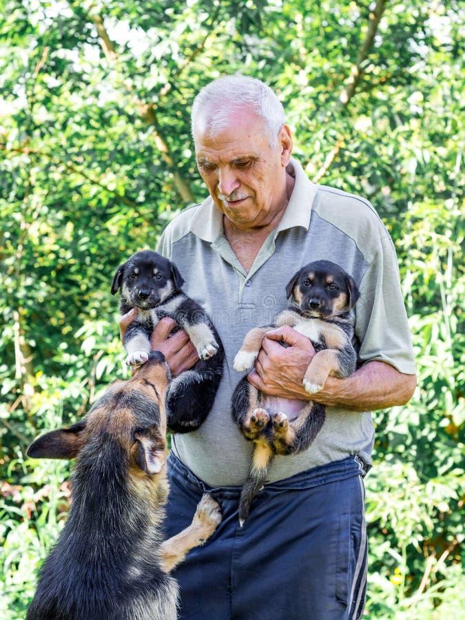 En äldre man rymmer två valpar i hand, enmamma blickar på hans royaltyfri foto