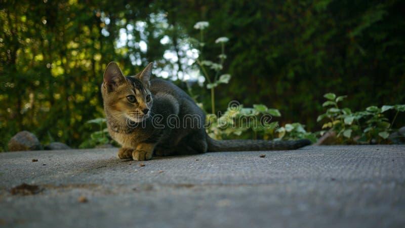 En älskvärd katt arkivbild