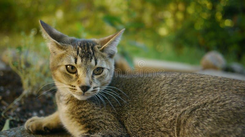 En älskvärd katt arkivfoton