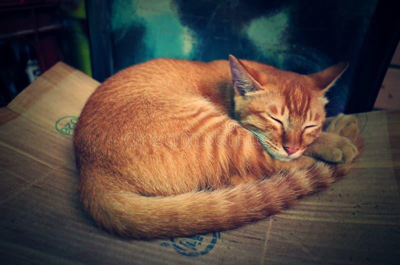 En älskvärd sova katt I kinesiska en bondes hem arkivfoton