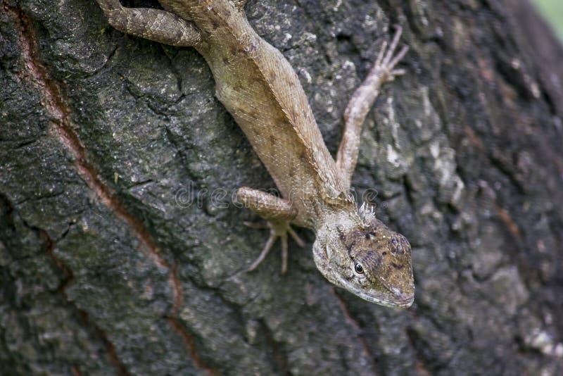 En ödla klättrar på ett träd royaltyfri bild