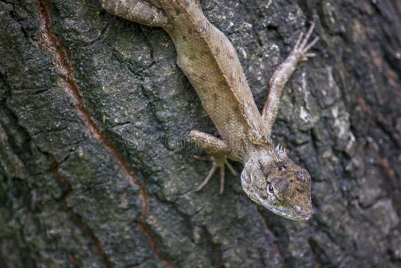 En ödla klättrar på ett träd royaltyfri foto