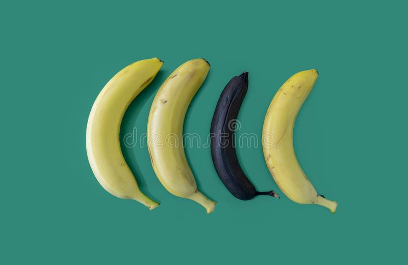 En övermogen banan bland gula bananer som isoleras på grön bakgrund arkivbild