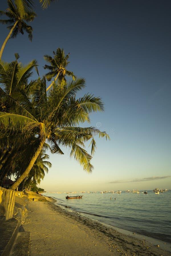 EN παραλία Tagbilaran, Filipinas Alona Palmera Φοίνικας στην παραλία Tagbilaran, Φιλιππίνες Alona στοκ εικόνες