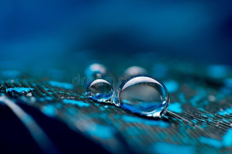 En abstrakt bild av fluffiga fjädrar för blåttfärg med för vattendagg för två makro droppe, härlig naturlig bakgrund royaltyfri bild