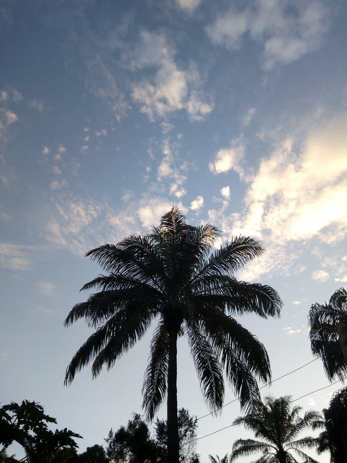 En afrikansk palmträd arkivbilder